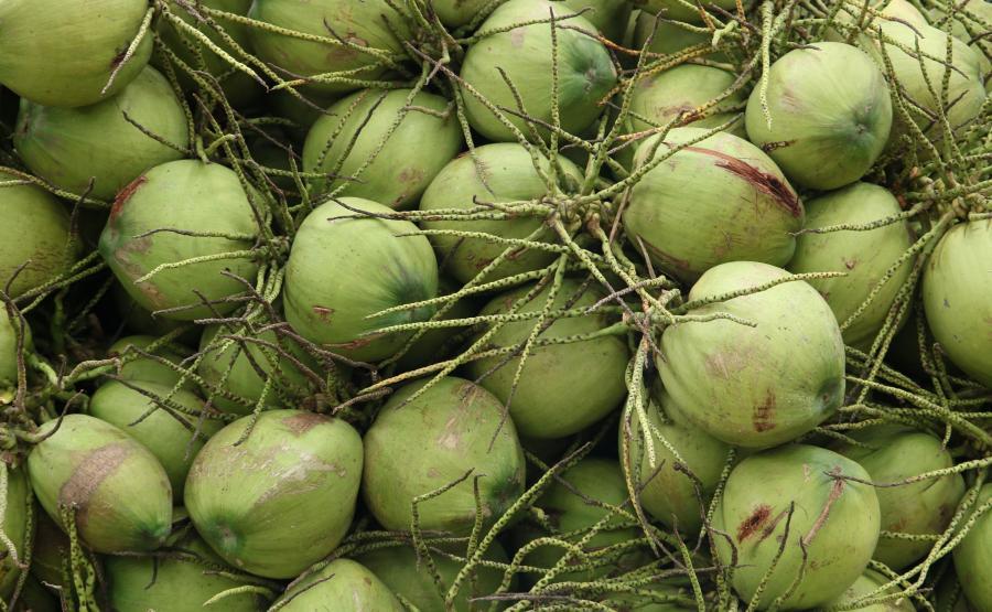 Warto jeść młode kokosy
