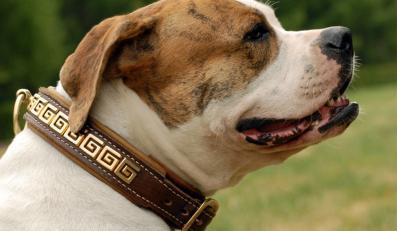 Ministerstwo chce czipowac psy