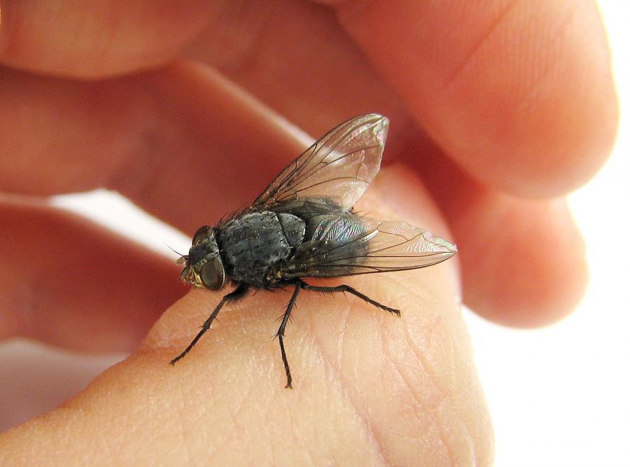 Gdy śpimy, owady wchodzą nam do ust lub nosa i je... zjadamy