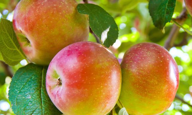 Jedz jabłka! Postaw się... otyłości